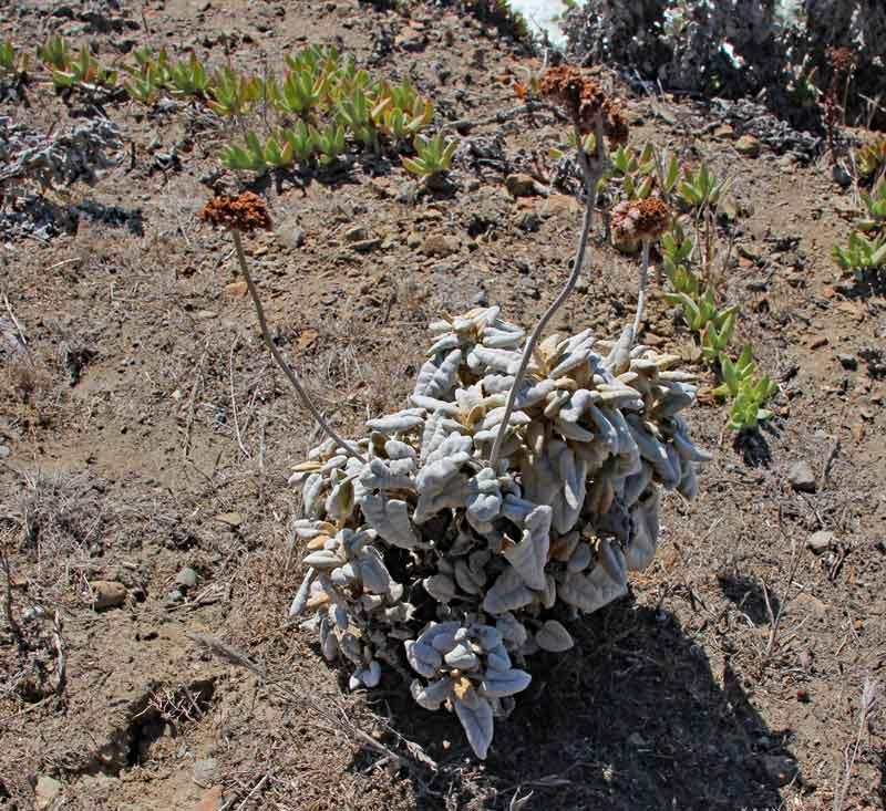 Bild 15 Pflanze direkt auf den Klippen