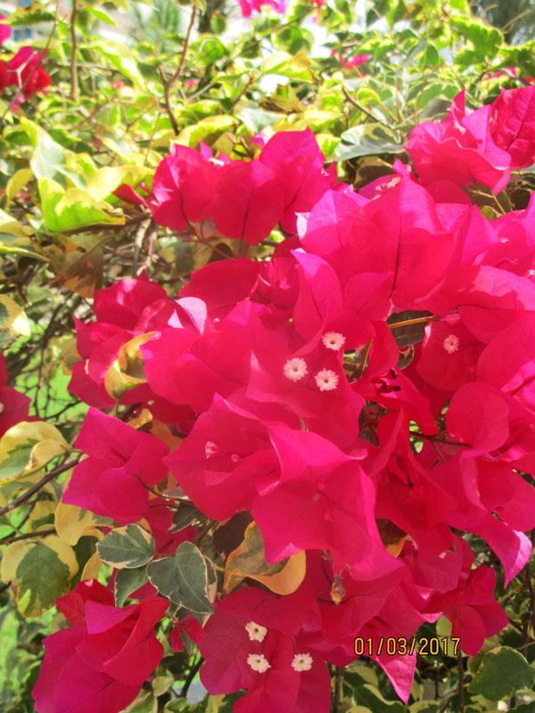Bild 3 Blumen und Pflanzen im Hotel-Innenhof