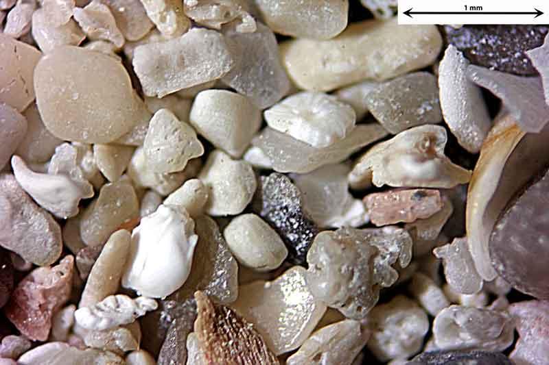 Bild 3 Sand aus Alcudia/Mallorca/Spanien Badestrandtrand, Objektiv Zeiss Plan 2,5/o,o8 Auflicht