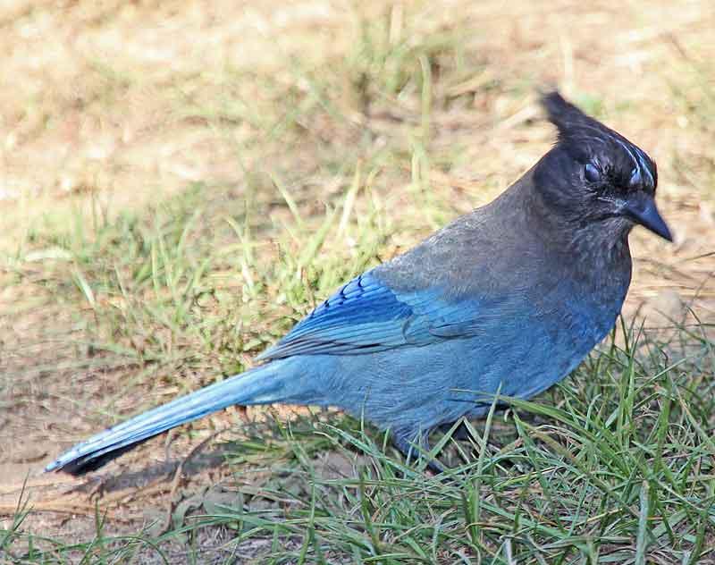 Bild 28 Vogel am Stellplatz, füttern mit Brotkrümel