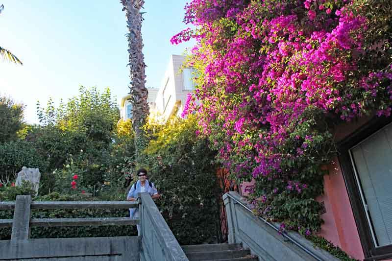 """Bild 19 Herrliche Blumen """"versüßen"""" den Aufstieg zum Coit Tower auf dem Telegraph Hill"""