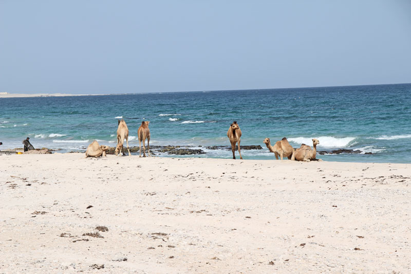 Bild 11 Blick auf die Küste, Muschelsammler sind hier unterewgs