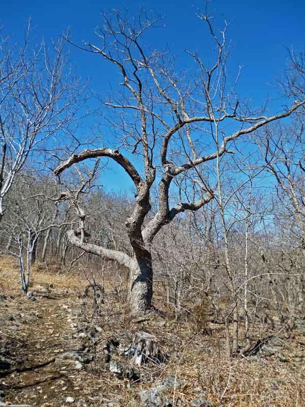 Bild 10 Unterwegs auf dem Oak Trail im Ondanaga State Park