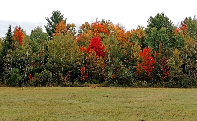 Bild 10 Herbstwald in Ontario