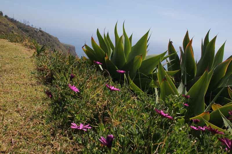 "Bild 10 Blumen vor unserem Bungalow im Hotel ""Jardim Atlantico"""