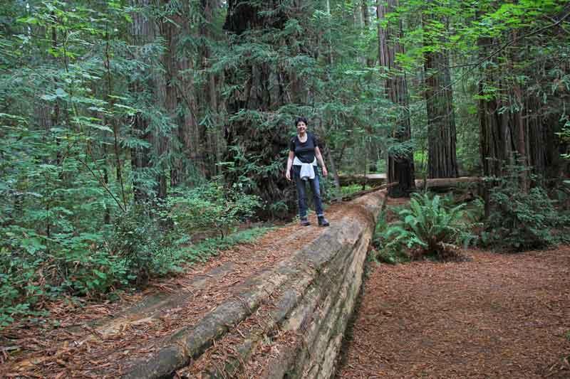 Bild 17 Margit in den Redwoods auf dem Hiouchi Trail