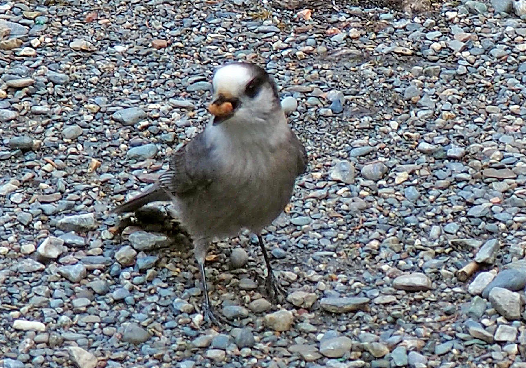 Bild 22 Vögel mit Nüssen füttern am Stellplatz