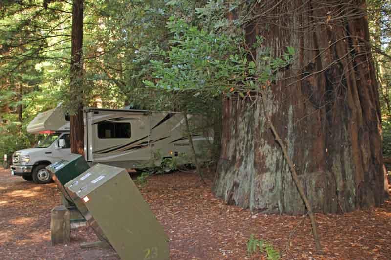 Bild 22 Stellplatz zwischen den Riesenredwoods