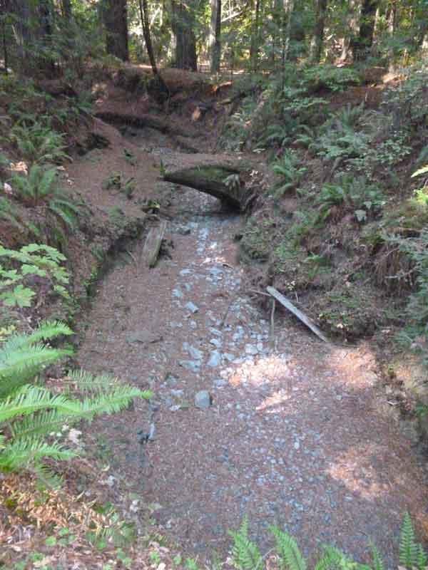 Bild 5 Ausgetrocknetes Bachbett im Humboldt Redwoods State Park