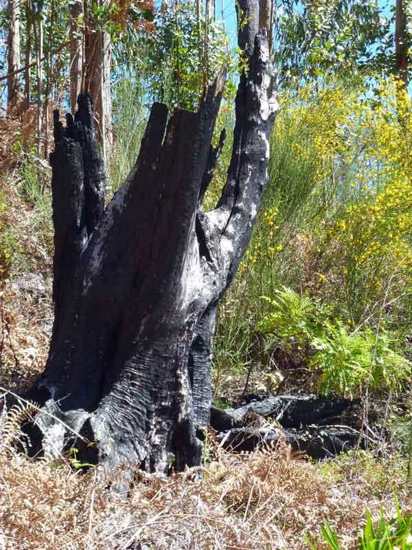 Bild 14 Alte Baumleichen säumen auch den Weg