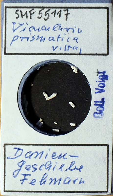 Bild 1 Francke Zelle mit Bryozoa aus Voigt Sammlung Senckenberg Frankfurt