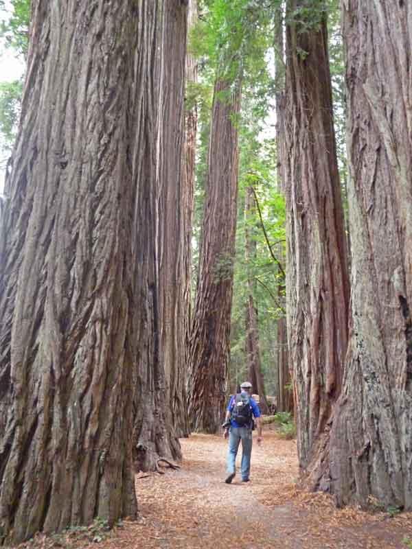 Bild 14 Wanderung parallel zum Smith River in den Redwoods auf dem Hiouchi Trail