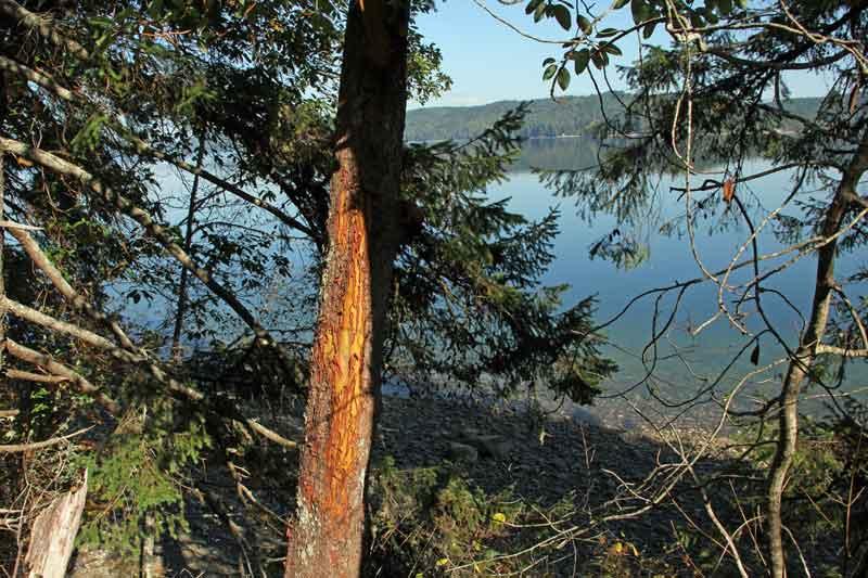Bild 6 Immer auf der 101 rund um die Olympic Peninsula mit tollen Aussichten auf das Meer