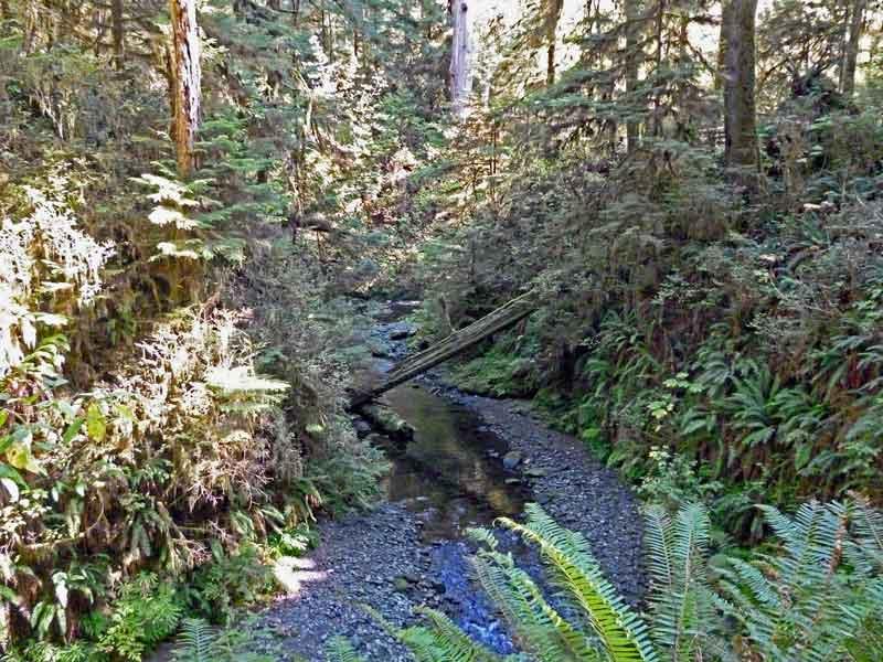 Bild 9 Ein kleiner Bach führt durch den dichten Regenwald im Quinolt National Forest