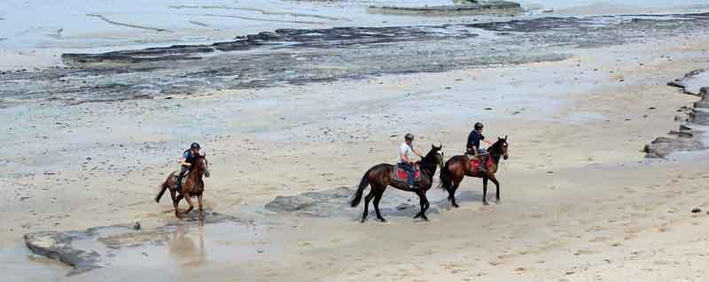 Bild 4 Pferdeausreiten am Strand von Dragey Ronthon