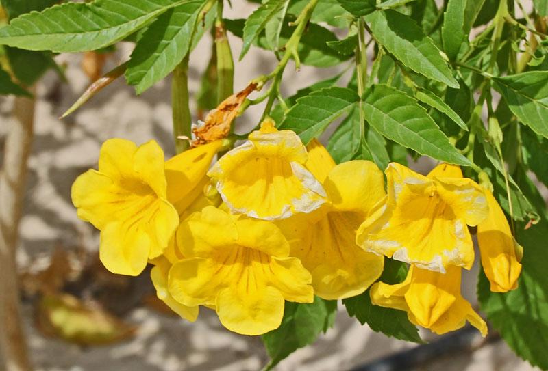Bild 2 Blumen in der Rotana Hotelanlage