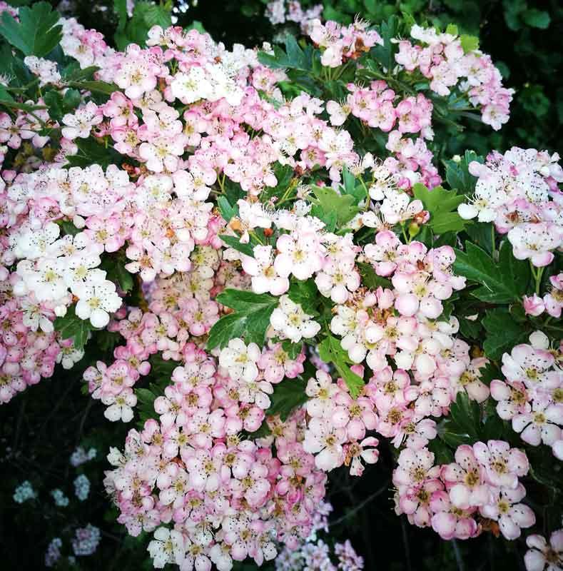 Bild 41 Blumen im Garten von Clerval