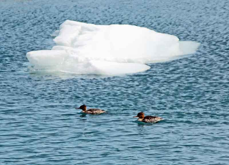 Bild 27 Am Ufer des Michigan Sees