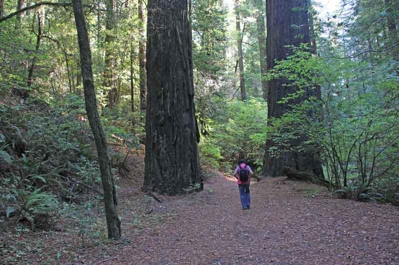 Bild 2 Wanderung am Morgen im Humboldt Redwoods State Park