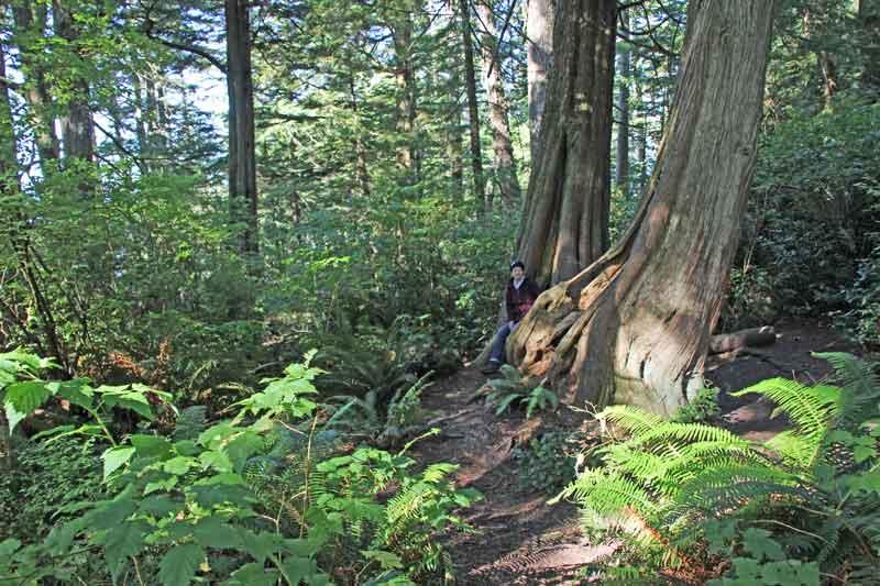 Bild 18 Ein wunderschöner Weg führt zwischen Riesenbäumen hindurch zum Cape