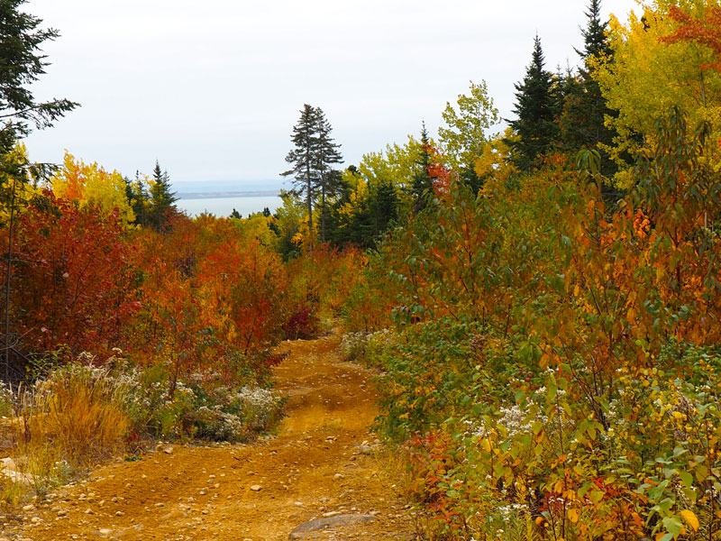 Bild 16 Auf einem Waldweg geht es nach oben