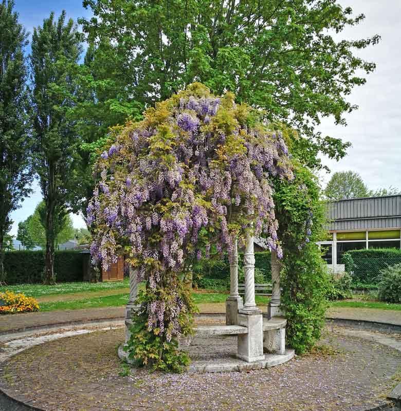 Bild 20 In einem Park in Honfleur.