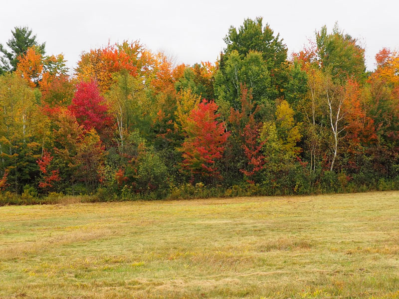 Bild 9 Herbstwald in Ontario