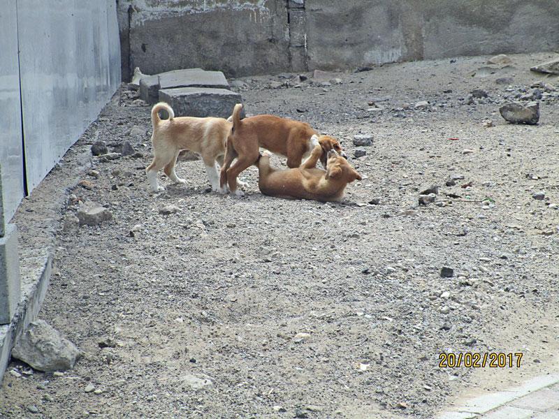 Am Parkplatz balgen sich junge Hunde