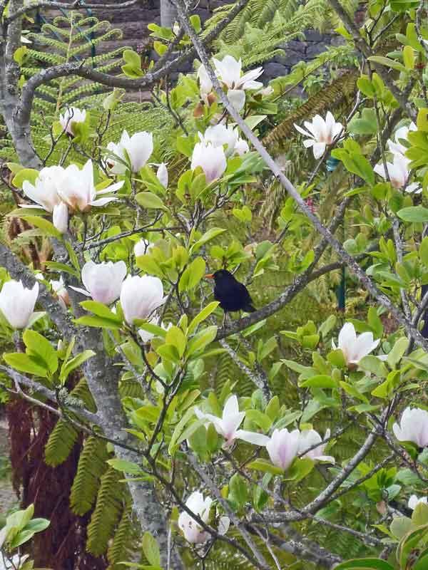 Bild 63 Blumen und Vögel überall auf Madeira