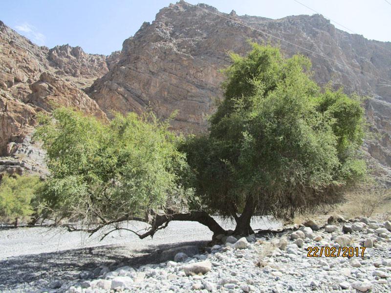 Bild 6 Fahrt ins Wadi Muaydin über einen unbefestigten Schotterweg