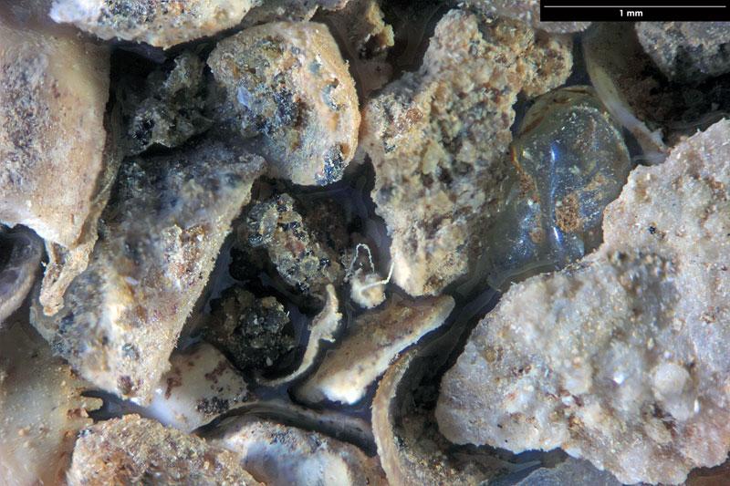 Bild 1 Sand aus Kobrow - Sternberger Gestein - fossil aus dem Oligozän