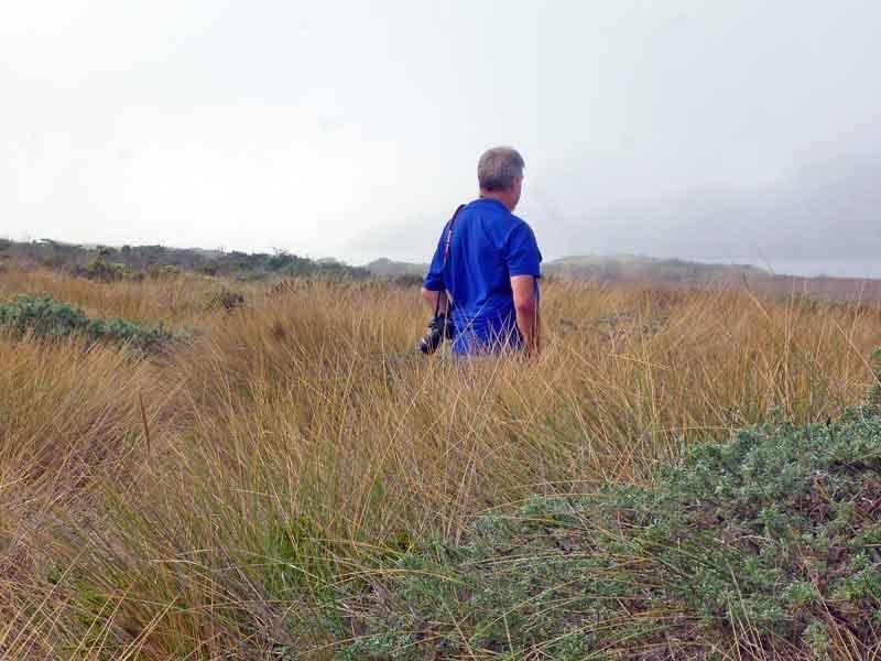 Bild 5 Wanderung durch das stachelige, feste Dünengras