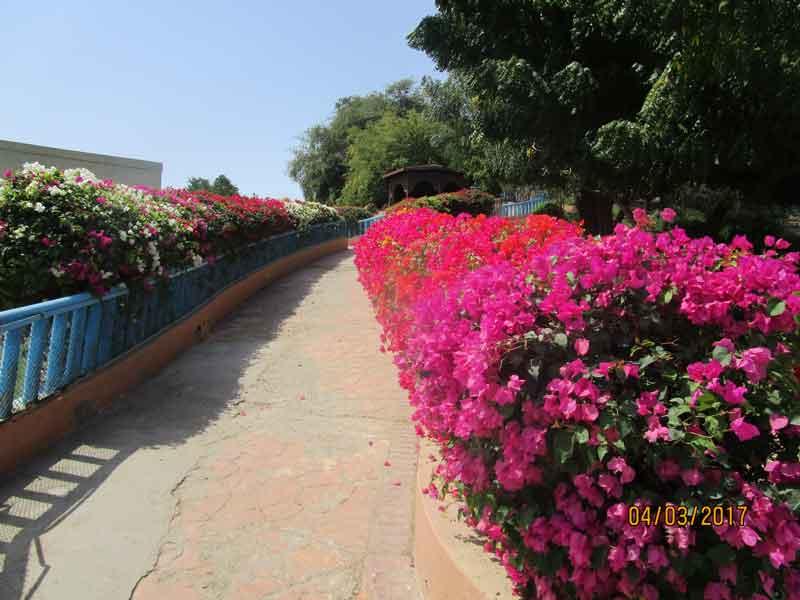 Bild 4 Im Qurum Park in Muscat