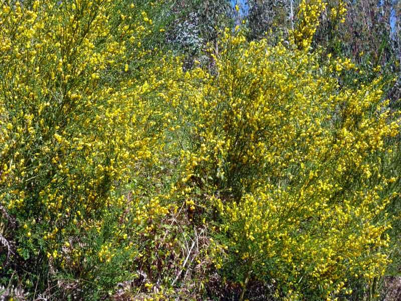 Bild 8 Blumen am Rande der Levada