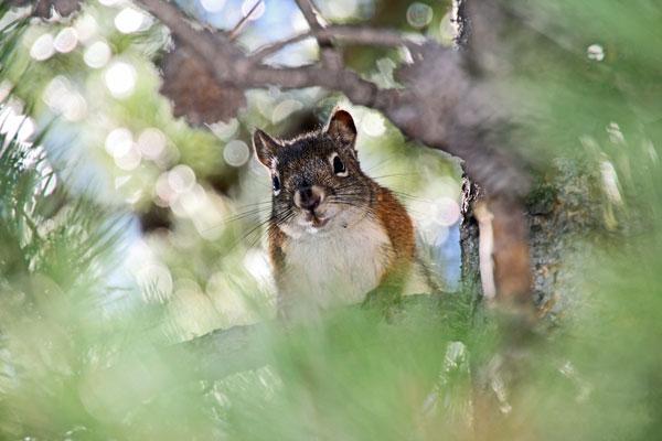 Bild 14 Der Pfad führt immer am Leigh Lake entlang, ab und zu turnt ein Squirrel in den Bäumen herum