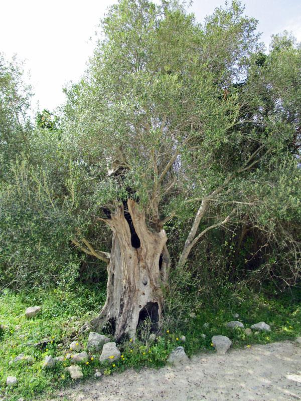 Bummel durch die alte antike Stadt Noto Antica