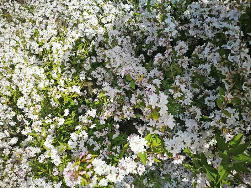 Bild 6 Blumen am Parkplatz an der Brücke über die Seine bei Honfleur in der Normandie