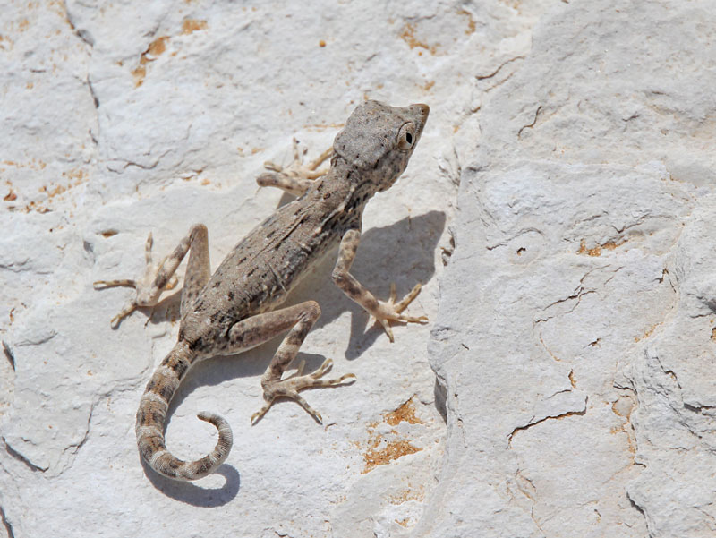 Bild 15 Geckos im Sand