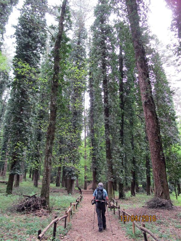 """Apulien 2016, Wandern im Nationalpark """"Foresta Umbra"""""""