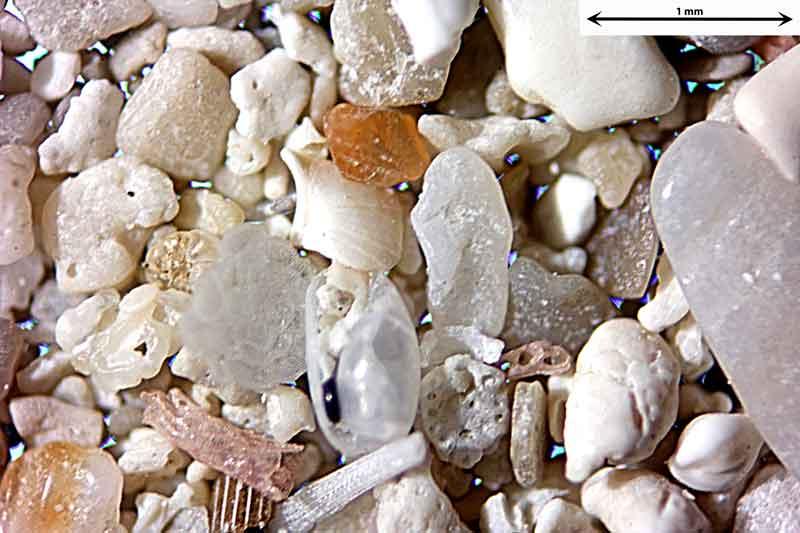 Bild 4 Sand aus Alcudia/Mallorca/Spanien Badestrandtrand, Objektiv Zeiss Plan 2,5/o,o8 Auflicht und Durchlicht