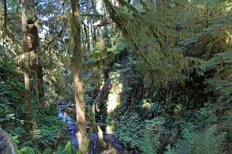 Bild 5 Ein schmaler Pfad führt durch den dichten Regenwald im Quinolt National Forest