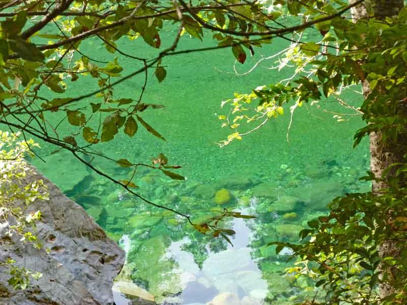 Bild 9 Die Bäume spiegeln sich im Wasser