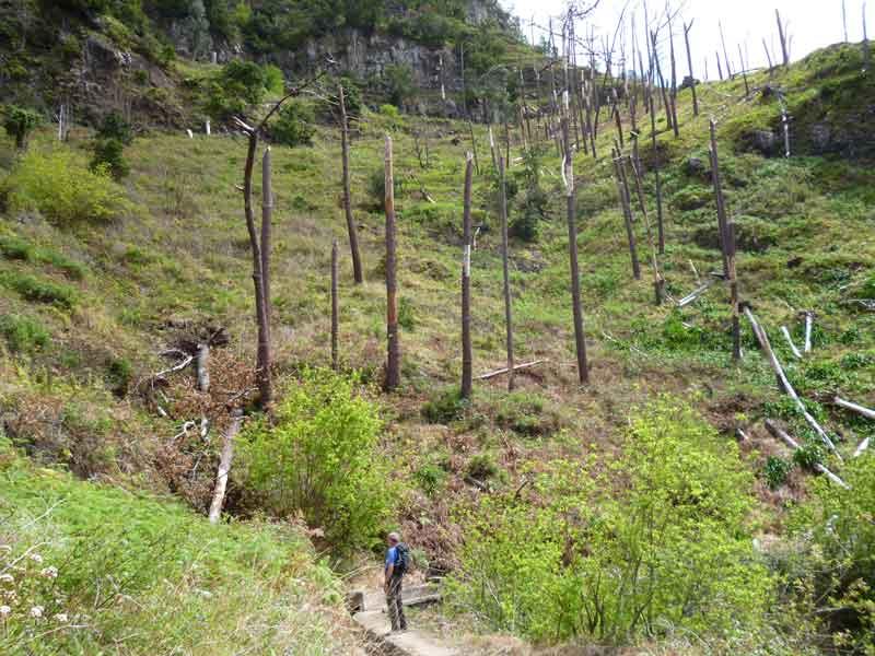 """Bild 8 Reste von Waldbrand unterwegs bei Levadawanderung, Start oberhalb von """"Ribeira Brava"""""""