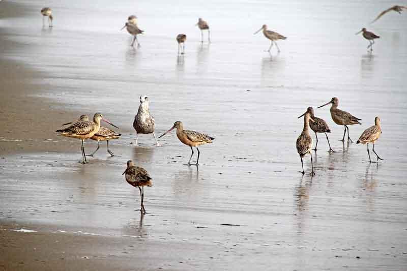 Bild 15 Vögel am Pazific