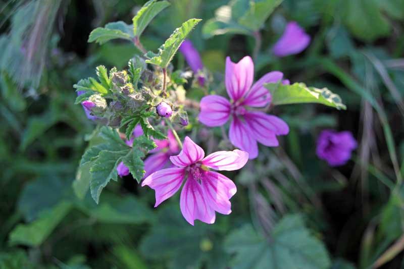 Pflanzen und Blumen in und um die Foresteria Planeta