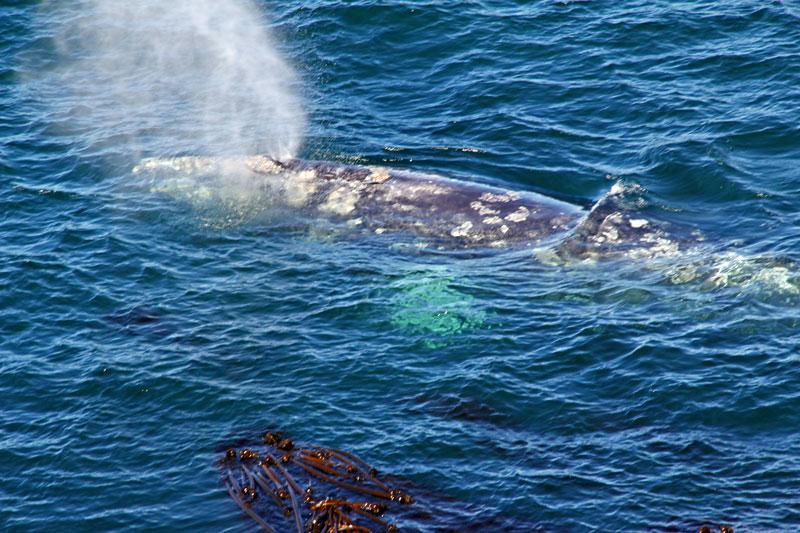 Bild 25 Plötzlich taucht direkt unterhalb der Plattform ein Wal