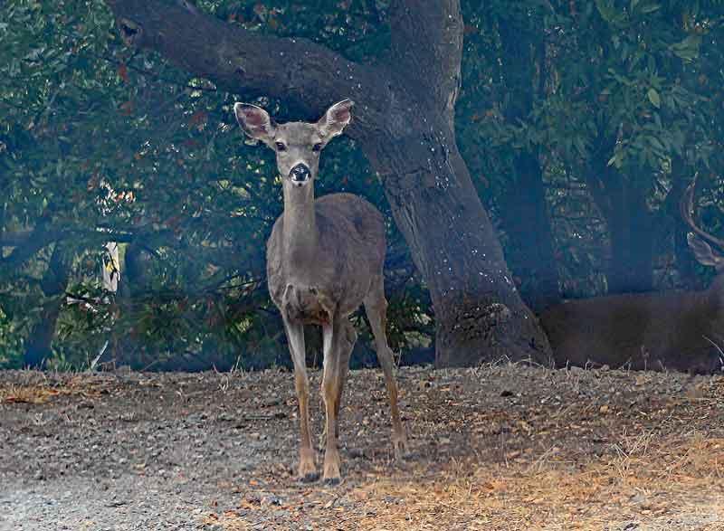 Bild 16 Deer unterwegs an der kurvigen Straße