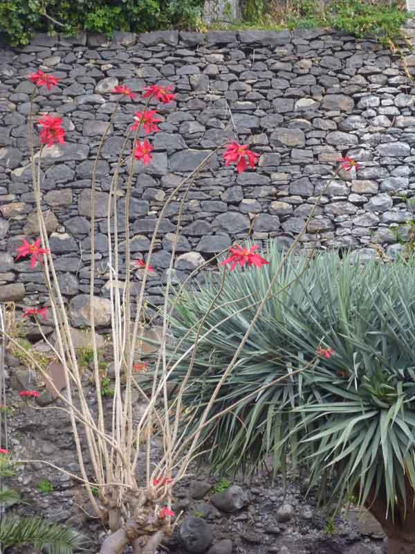 Bild 24 Pflanzen auf der Levadawanderung