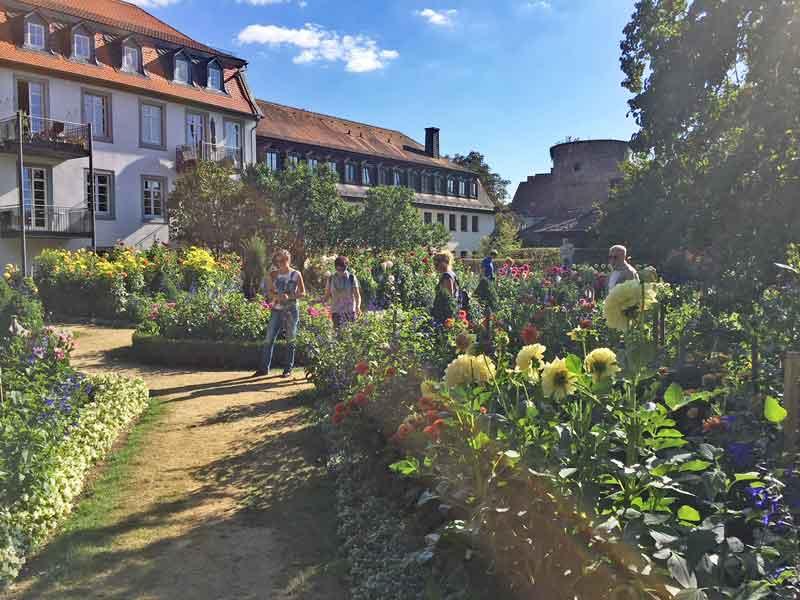 Bild 14 Im Dahliengarten in Fulda