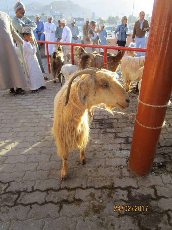 Bild 6 Viehmarkt in Nizwa